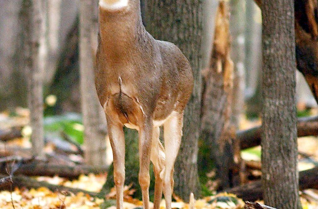 Deer Management Program